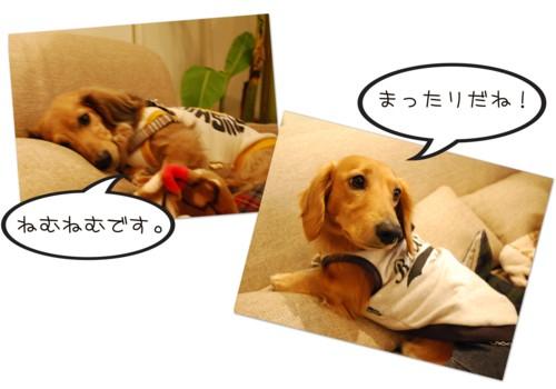 2DSC_2274.jpg