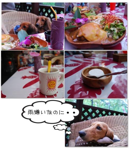 2DSC_4955.jpg