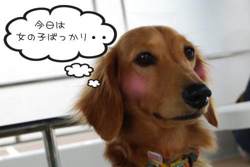 2DSC_5550.jpg