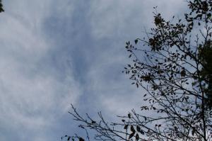 桜の葉っぱさんさようなら
