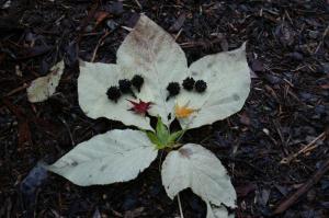 葉っぱでらくがき♪