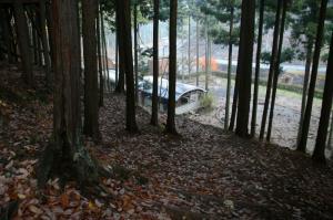落ち葉が積もった遊歩道