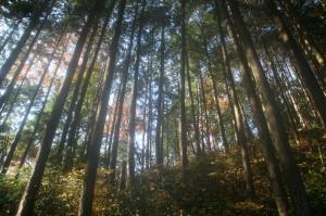キャンプ場上の森
