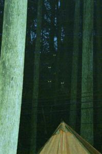 闇に隠れて生きる