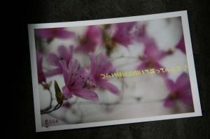 ツツジの花からのメッセージ