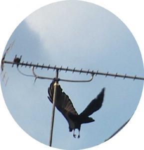 カラス飛ぶ