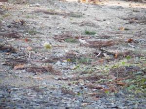 鳥さんカメラ目線