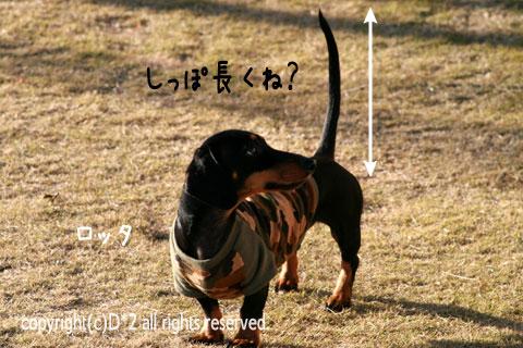 11_20081220224841.jpg