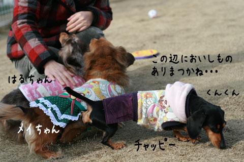 14_20090204205712.jpg