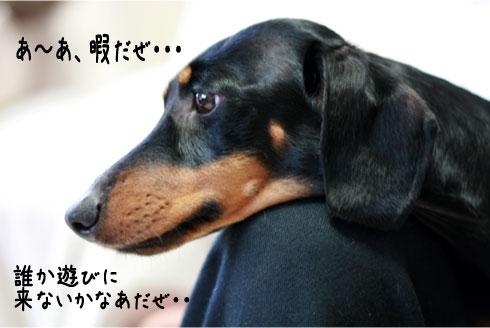 19_20090320224732.jpg