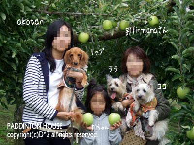 リンゴ狩2