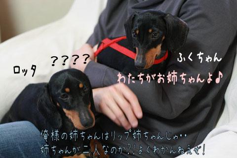 ロッタ&ふくちゃん