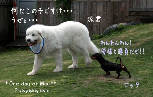 4_20090526000750.jpg