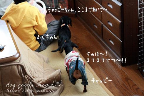 5_20090119004228.jpg