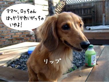 6_20081019135408.jpg