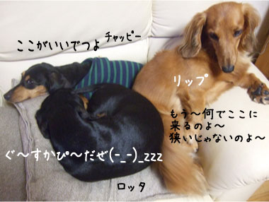 7_20081019151237.jpg