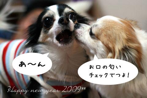 7_20090106184730.jpg