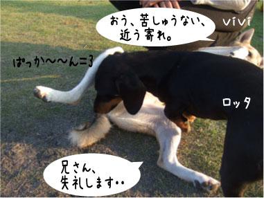8_20081019145528.jpg