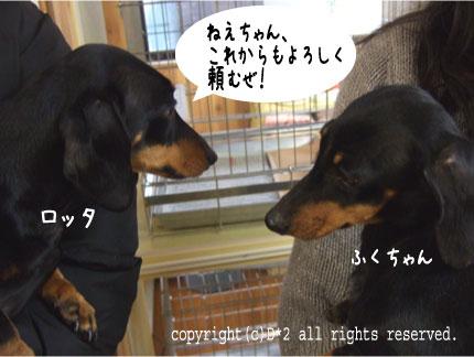 8_20081210000049.jpg