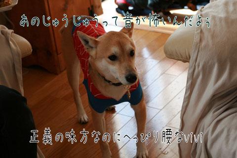 vivi2_20090216163232.jpg