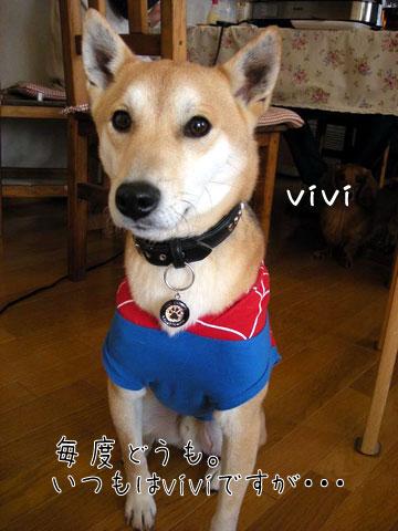 vivi3.jpg