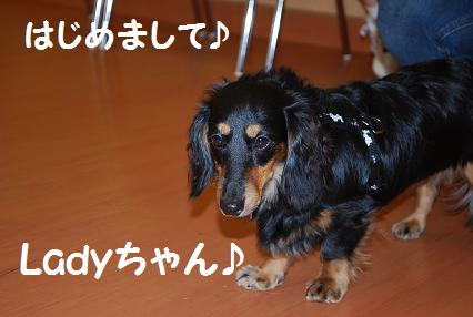 Ladyちゃん