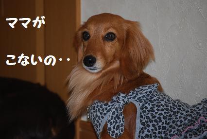 リンちゃん