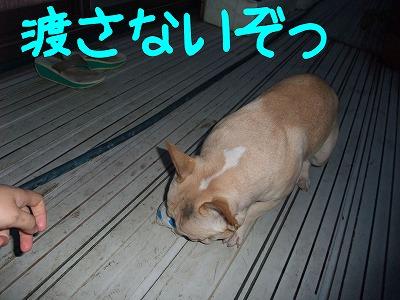 持ってこぉ~い!!5