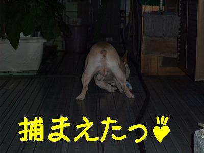持ってこぉ~い!!3
