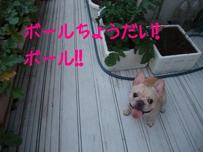 持ってこぉ~い!!1