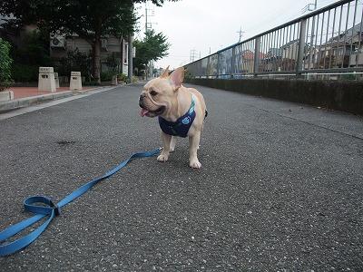 ハーネス散歩4