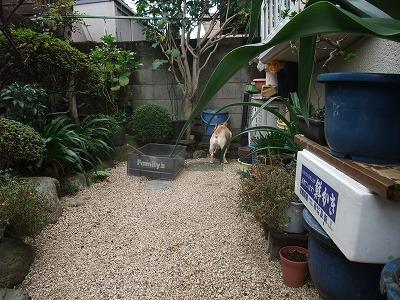 ミニ庭散策6