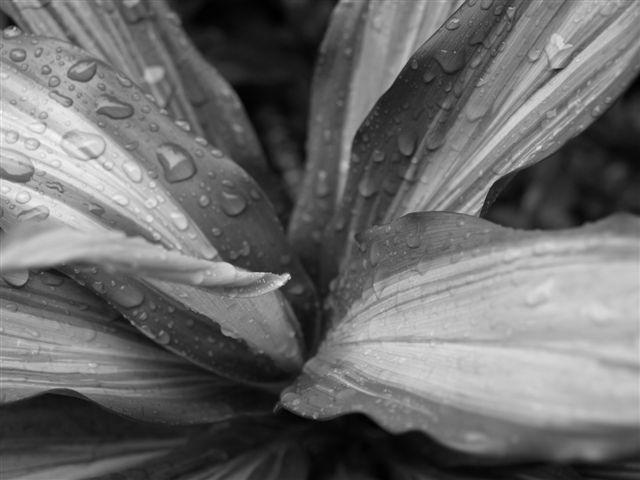 雨の日でした・・・