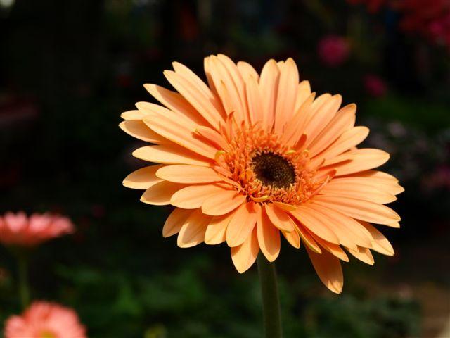 一輪の花・・・