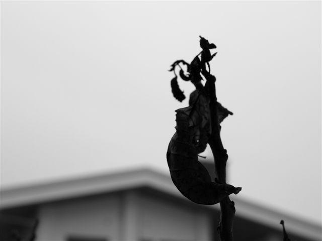 雨の日の葉っぱ・・・枯渇した心境-1