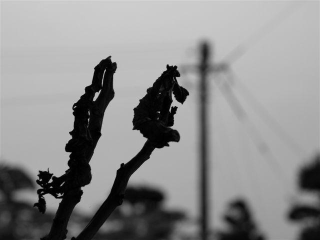 雨の日の葉っぱ・・・枯渇した心境-2