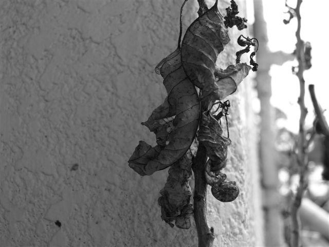 雨の日の葉っぱ・・・枯渇した心境-3
