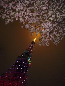 八重桜と貴婦人