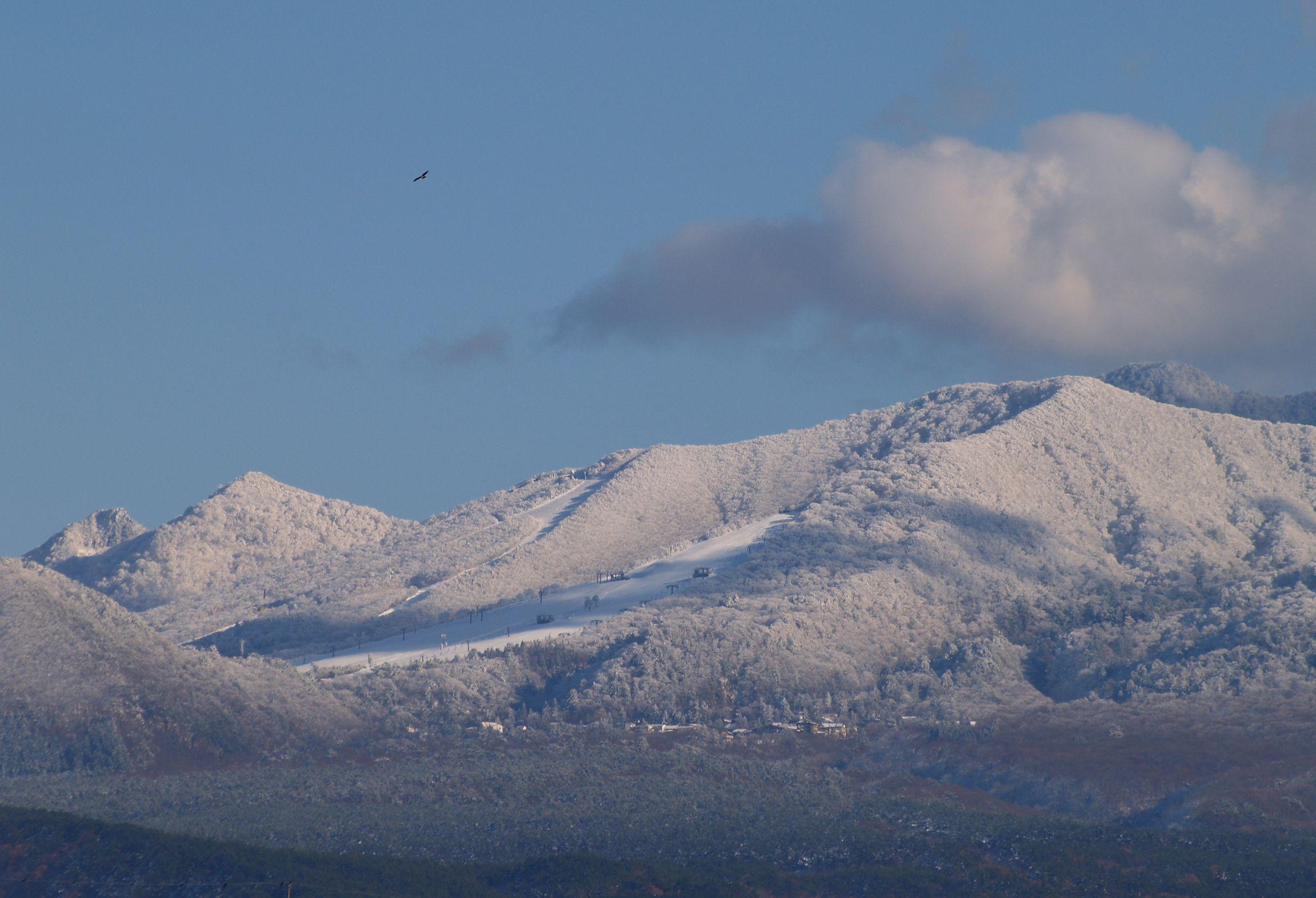 大山スキー場の雪