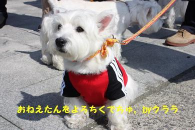 みさきブログの協力犬
