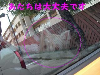 CIMG3353.jpg