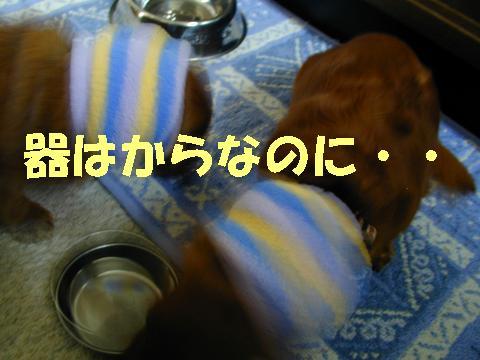 いぶちる14