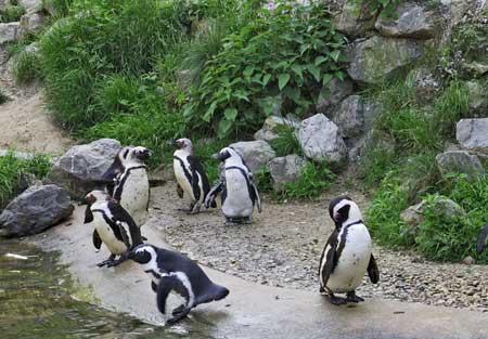 0211_penguin.jpg