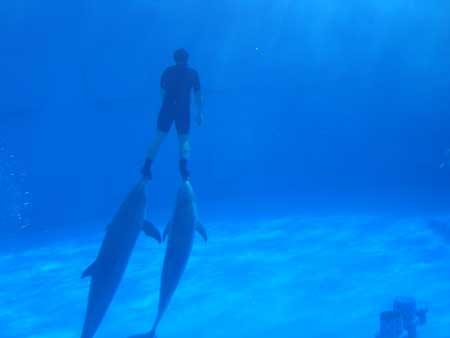 090416_dolphinshow.jpg
