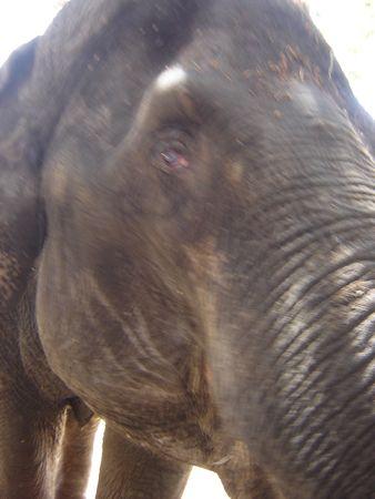 zoo_08_ele.jpg