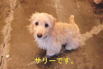 DSC_0082-sako.jpg