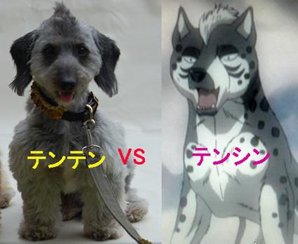 DSC_0131-ten-vs.jpg
