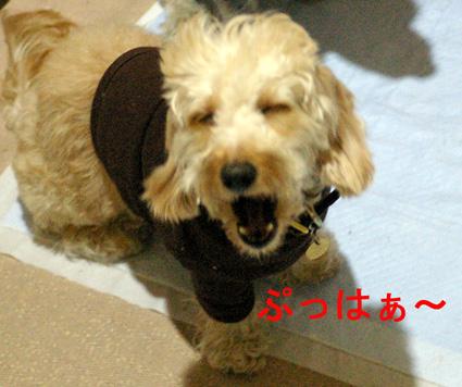 IMGP6192hina.jpg