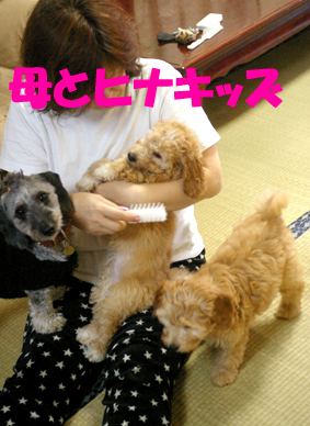 IMGP7516-hahato.jpg