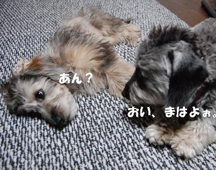 Img0238-tenmaha.jpg